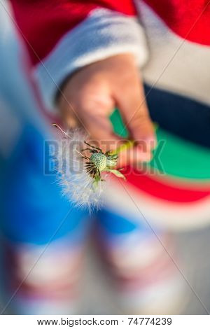 Young Child Holding A Dandelion Clock