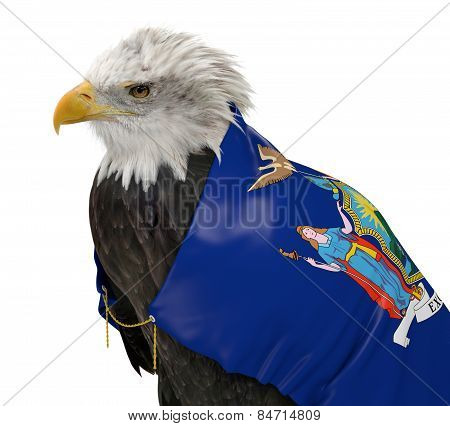 American bald eagle wearing the New York state flag