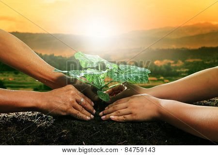 Human Hand Planting Young Plant Together On Dirt Soil Against Beautiful Sun Light In Plantation Fiel