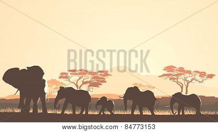 Horizontal Illustration Of Wild Animals In African Sunset Savanna.