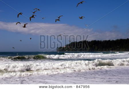 sea gulls in flight along the ocean shores poster