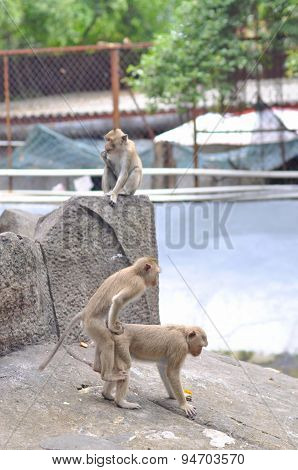 Cu Chi, Vietnam - August 13, 2011: Monkeys Are Playing Happily In The Botanic Garden And Zoo Of Saig