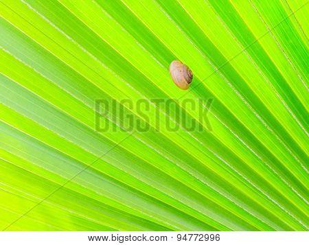 Shellfish On Green Palm Leaf