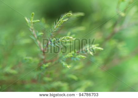 Green Branch On A Green Background