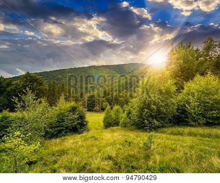 Forest Glade On Hillside At Sunset