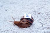Picture of Snail with with symbols of money on a shell poster