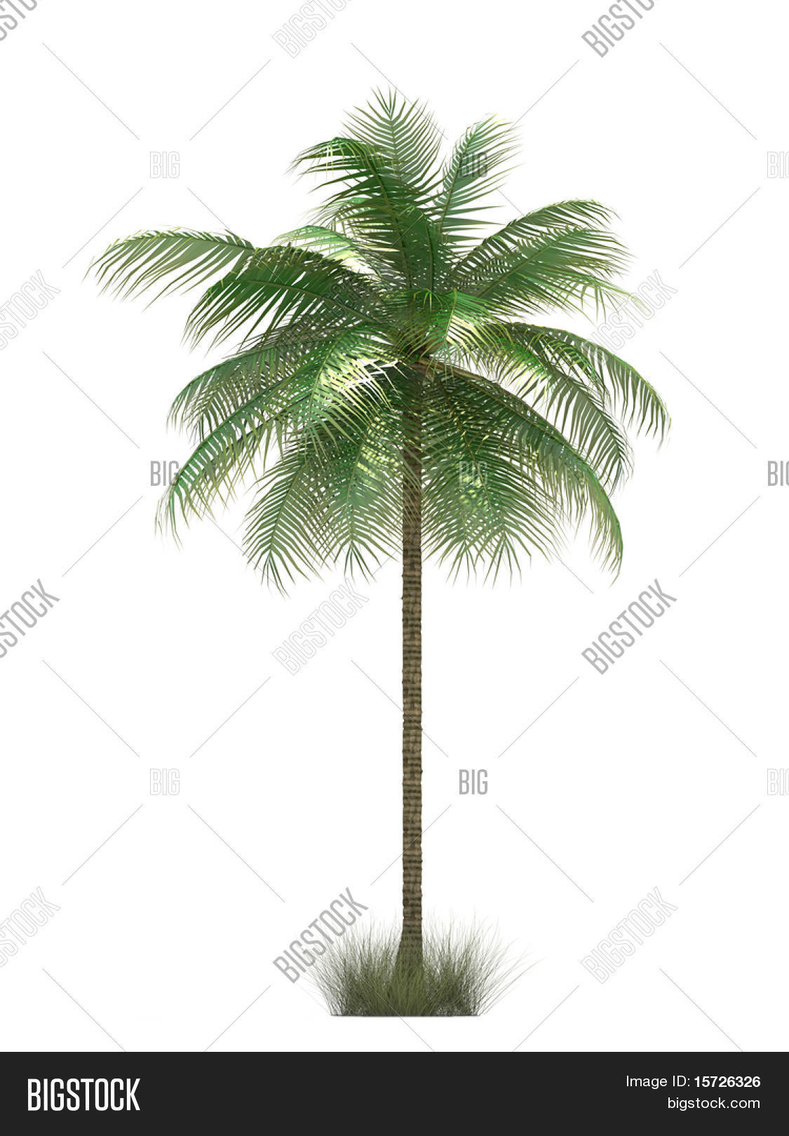 Isolated Palm Trees Image Photo Free Trial Bigstock