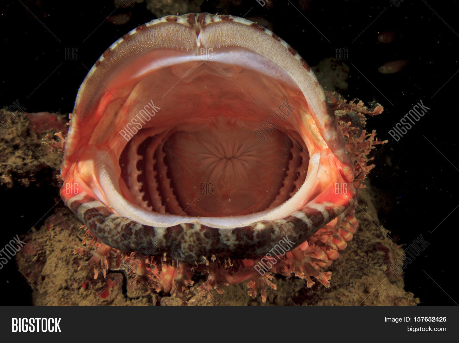 Fish Mouth Image Photo Free Trial Bigstock