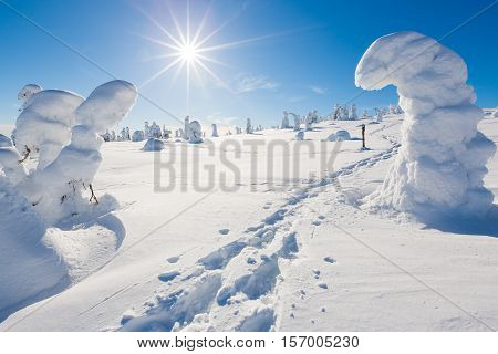 Frozen heavy snow on trees in beautiful landscape in Lapland with snow shoe tracks