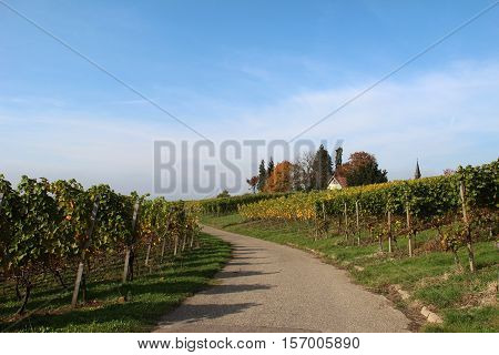 Vineyards / A view of the vineyards in summer