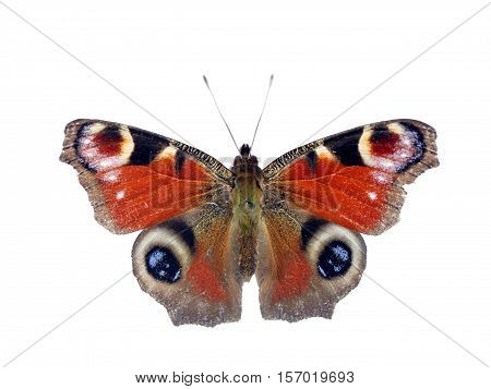 colorful alive butterfly on a white background
