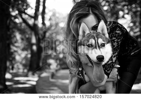 Girl in the park with a dog Husky. The girl with the siberian husky. Delightful girl plays with a Siberian Husky. Girl walking with a hunting dog - the West Siberian husky. Close-up. Fashion photo