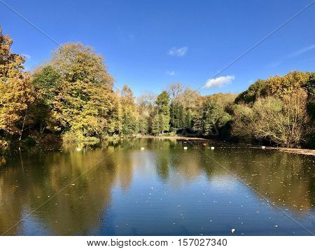 Mixed Bathing Pond at Hampstead Heath in Autumn