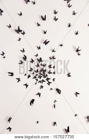 Black butterfly on a white background. Texture with butterflies. The decoration of the walls