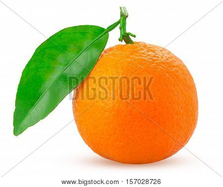 Tangerine Or Mandarin Fruit With Green Leaf