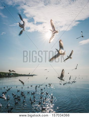 Blurry movement of flying seagulls in the air to fight for feeding food. Cloudy blue sky and ocean as background.