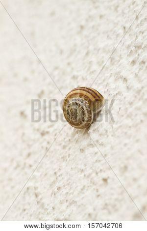 Slug little on the white rough wall