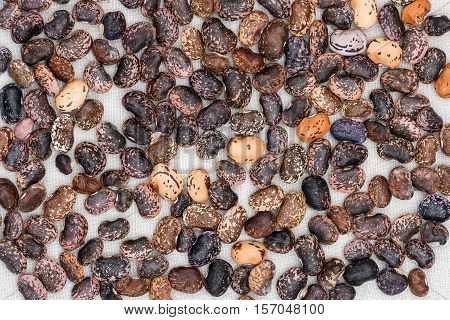 Background from multi-colored bean seeds on a light cloth of dark purple and black plain or tiled speckled spotted