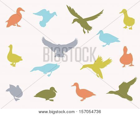 Vector silhouettes of ducks and ducklings standing, walking, swimming, diving and flying. Vector illustrations isolated on white background.