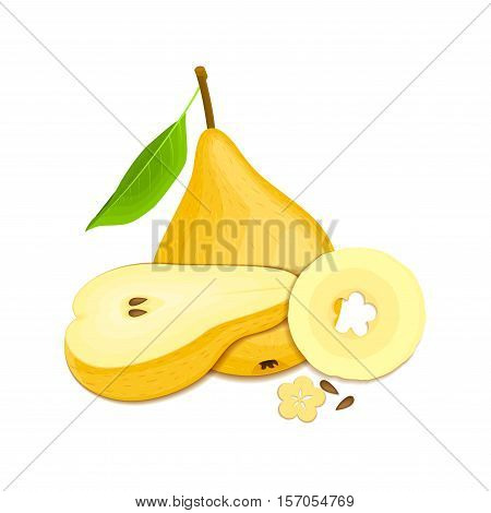 Composition of several pears. Yellow vector pear fruits whole and slice appetizing looking. Group of tasty fruits colorful design for the packaging of juice, breakfast, healthy eating, vegetarianism