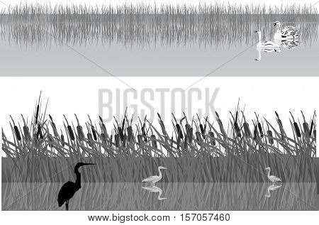 illustration with swans and herons in rushy lake
