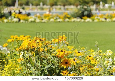 Yellow flowers on garden on Jardin du Luxembourg in Paris, France, on a sunny day