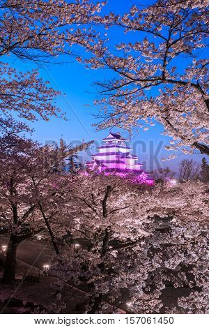 Light up at Tsuruga Castle (Aizu castle) surrounded by hundreds of sakura trees