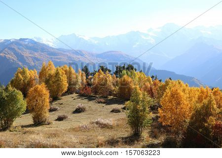 Beautiful golden autumn forest on the top of the mountain in sunset haze, Caucasus mountains, Svaneti, Georgia, Europe