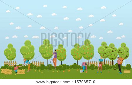 People picking fruit in garden. People picking pears and cherries in orchard. Vector illustration in flat style.