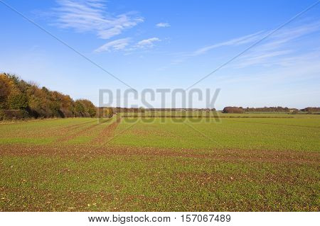 Colorful Trees And Wheat Crop
