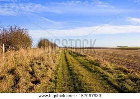 Bridleway In Sunshine