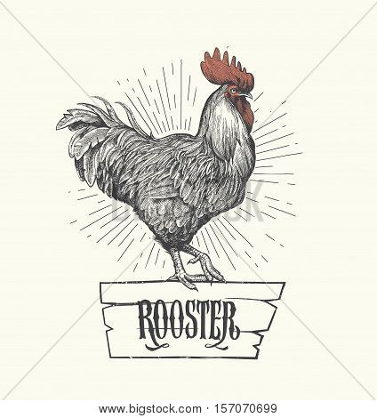 Rooster in graphic style hand drawn illustration.