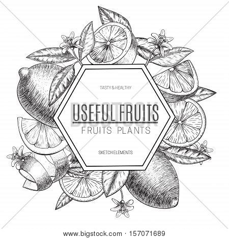 Vector design lemon with ink hand drawn.Whole lemon, sliced pieces half, leave sketch. Fruit engraved style illustration. Retro vector illustration. Detailed citrus drawing. Great for water, detox drink, natural cosmetics