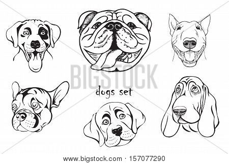 Muzzle Dogs Of Different Breeds