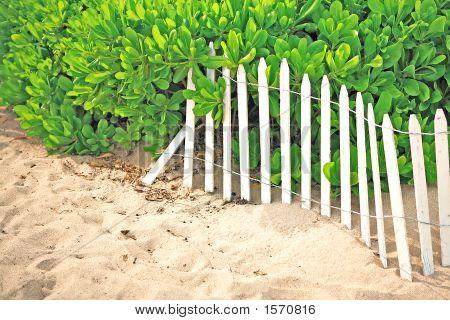 Fence On Beach With Foliage