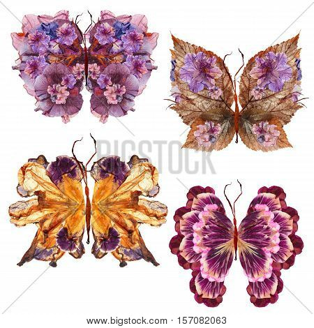 floral butterfly made bizarre curved extruded dried lily petals pressed Petunia flower