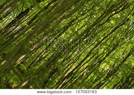 Slanted picture of trees in the forest