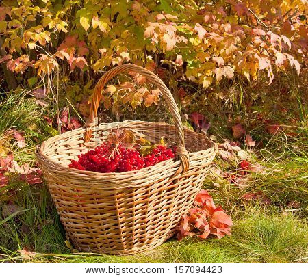 Beautiful Colored Autumn. Autumn Harvest In Basket