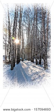 Beautiful Christmas card. Birch forest in sunny day background winter landscape