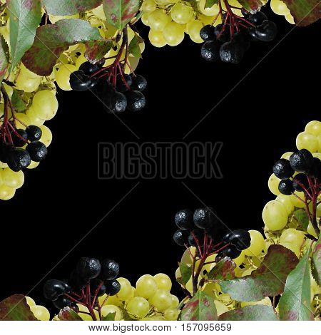 Beautiful background of aronia and grapes. Isolated