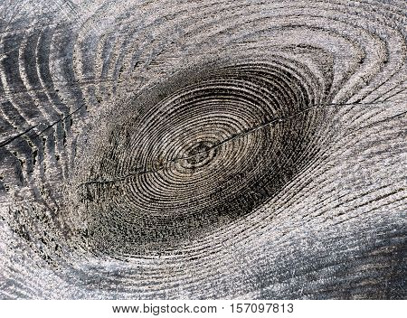 old textured wood closeup with natural patterns retro style inversion