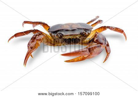 Freshwater crabs isolated on white background. Ricefield crab in Thailand. File contains a clipping path.