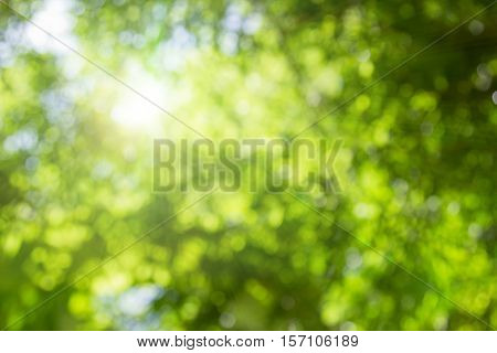 Blurred nature background.Backdrop with color and bright sun light. Summer holidays concept.bokeh background or Christmas background.Green Energy.Christmas Blurred.