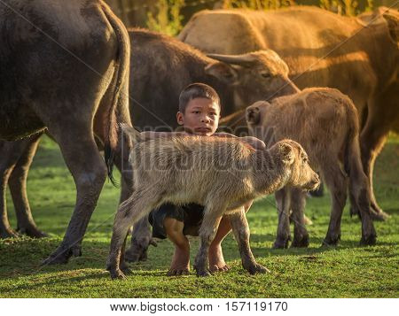 Asian children and buffalo at countryside Thailand.