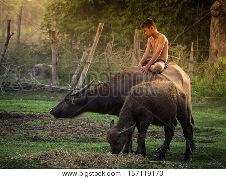 Child riding on buffalo in countryside Thailand.