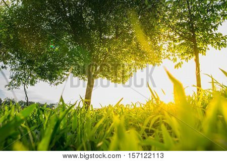Forest trees and green grass where light shines
