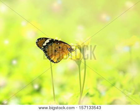 beautiful butterfly absorb some sweet from flowers in sunny day