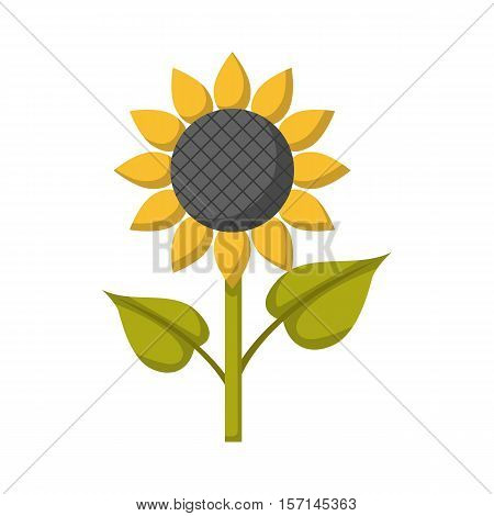 Vector cartoon illustration with isolated flat sunflower icon. Summer garden plant with yellow petals and sunflower seeds. Cartoon vector icon