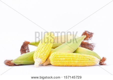 fresh ear of  sweet corn on cobs kernels or grains of ripe corn on white background corn vegetable isolated
