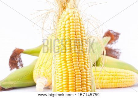 raw ear of  sweet corn on cobs kernels or grains of ripe corn on white background   sweet corn vegetable isolated